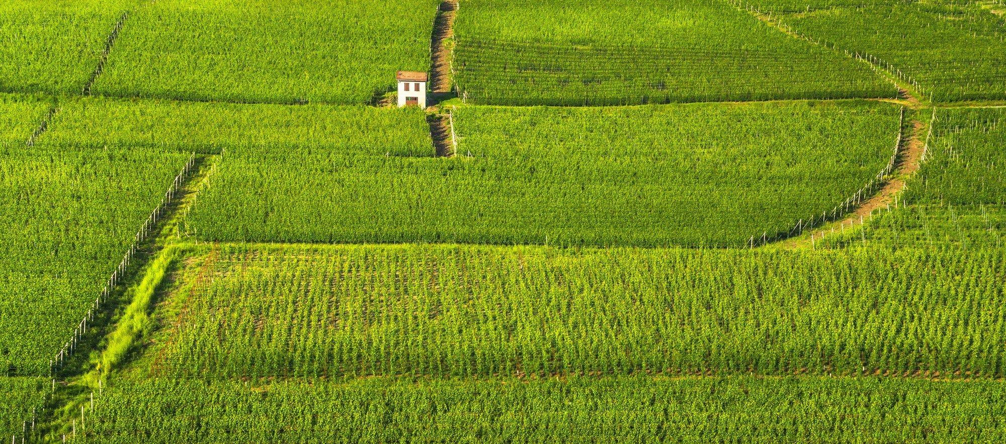 Langhe vineyards rows panorama, Barolo, Piedmont, Italy Europe.