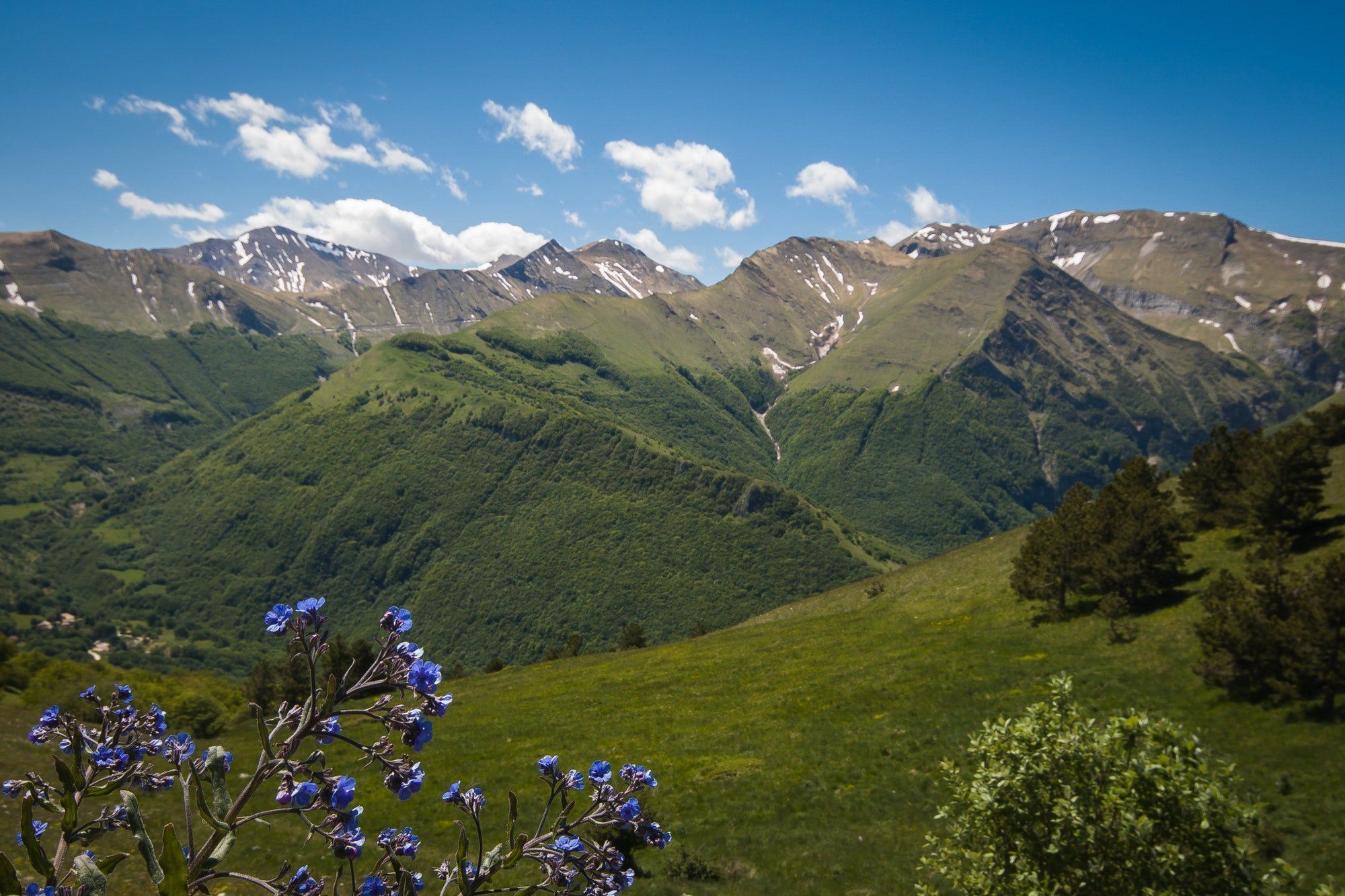 Wild blue flowers in the National park of Monti Sibillini